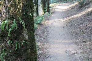 4T Trail, Marquam Park